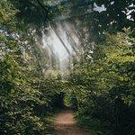 Trail on Hawksbill