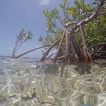 Crystal Clear waters, and perfect conditions