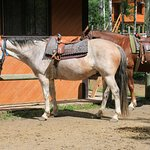 Boundary Ranch Foto