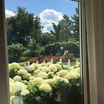 Elmhirst's Resort Photo