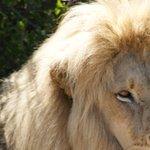 Photo de Fairy Glen Private Game Reserve