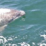 Sea Life Surveys Foto