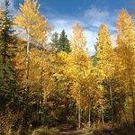 Great in fall