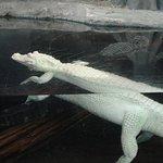 North Carolina Aquarium at Fort Fisher Photo