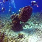 Foto de Reef House Resort
