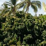 gorgeous palm trees