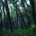 Photo de Garajonay National Park