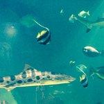 Photo de National Sea Life Centre