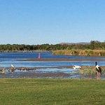 Lake bird life