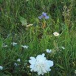Blumengarten Ebertswiese
