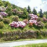 Skyline Rotorua Foto