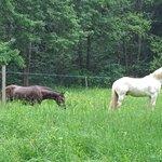 Malevil horses
