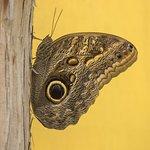 Costa rica butterfly exhibit