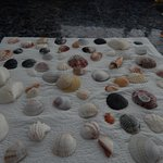 Best shelling beach in SW Florida....