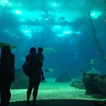 Photo of Lisbon Oceanarium