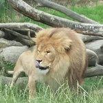 Photo de Parc Zoologique Cerza
