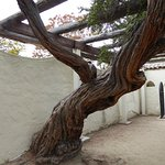 Old tree with character in the park's garden