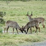 Full-Day Arusha National Park Tour with Lunch Foto
