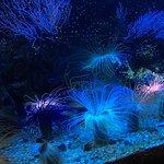 Foto di Grand Aquarium