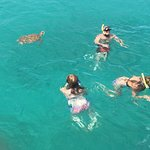 Swimming the the sea turtles.