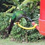 Comederos para atraer colibríes en los alrededores del restaurant