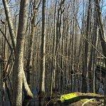 Louisiana Purchase State Park Foto
