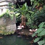 Foto de Phoenix Parc Floral de Nice
