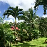 Potret Arenal Country Inn