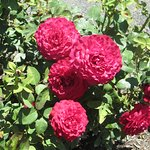 This is from the Rose Garden.