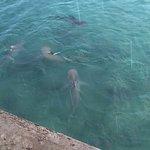 sharks below the deck