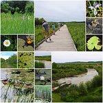 Wye Marsh exploration