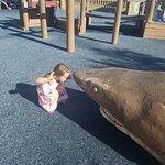 Tiger Shark Cove Park照片