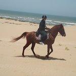 Pure breed arabian horse