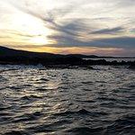 Acadian Nature Cruises Foto