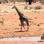 Photo de Kilaguni Serena Safari Lodge