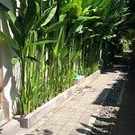Foto de Juada Garden 10