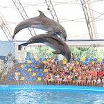 Kobleve Dolphinarium Nemo