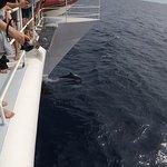 Photo de Deep Sea Divers Den Day Trips