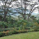 Photo of Morawaka Tea Garden Lodge