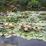 Photo de Aquatic Plants Garden Mizunomori