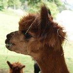 Alpen Wildpark Foto