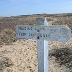 Dunes at South Cape Beach