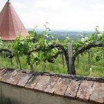 Weingarten neben dem Burgweg