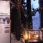 Bastoone Exhibit