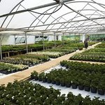 Many of the plants we sell are grown on-site, with everything from herbs and vegetables to flowe