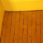 Old Dirty and Mildew Carpet