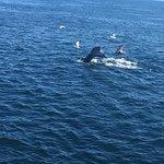 Foto di Dolphin Fleet Whale Watch