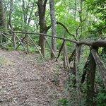 Parco Naturale Del Bosco Di Tecchie