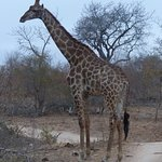 Photo of Idube Game Reserve