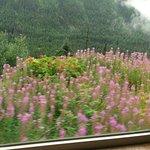IMAG0570_large.jpg